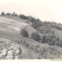 1950_3835