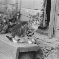 Cat in Jaunpiebalga