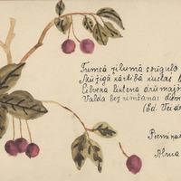 0450-Alma-Medne-03-0132