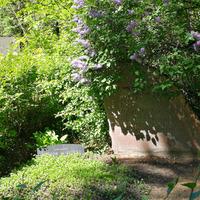 Austriņu ģimenes kapi