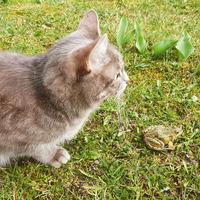 Ilzes Ļaksas-Timinskas kaķis un varde