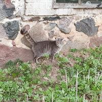 Ilzes Ļaksas-Timinskas kaķis