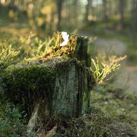 Salvetes mežā