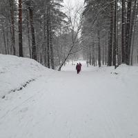 Pastaiga mežā