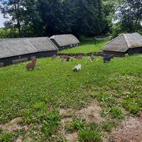 Bisnieku māju izvietojums maketā