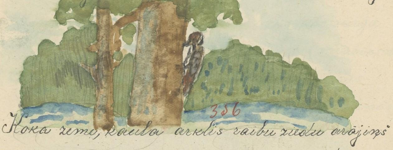 1497-Abelu-pamatskola-0068 (2).jpg